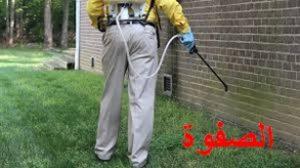ارقام شركات مكافحة الحشرات بالرياض