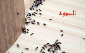 ارقام مكافحة الحشرات بالرياض