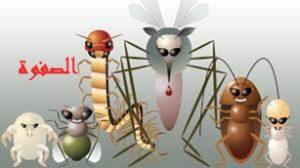 افضل شركة مكافحة الحشرات بالرياض