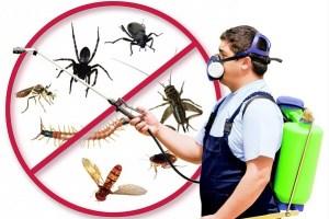 انواع الحشرات المنزلية