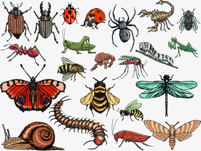انواع الحشرات