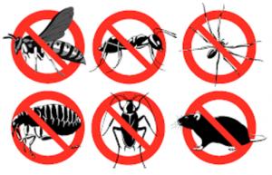 مكافحة الحشرات بالخرج