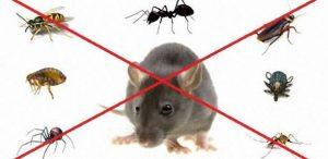 ارخص شركة مكافحة حشرات في الخرج