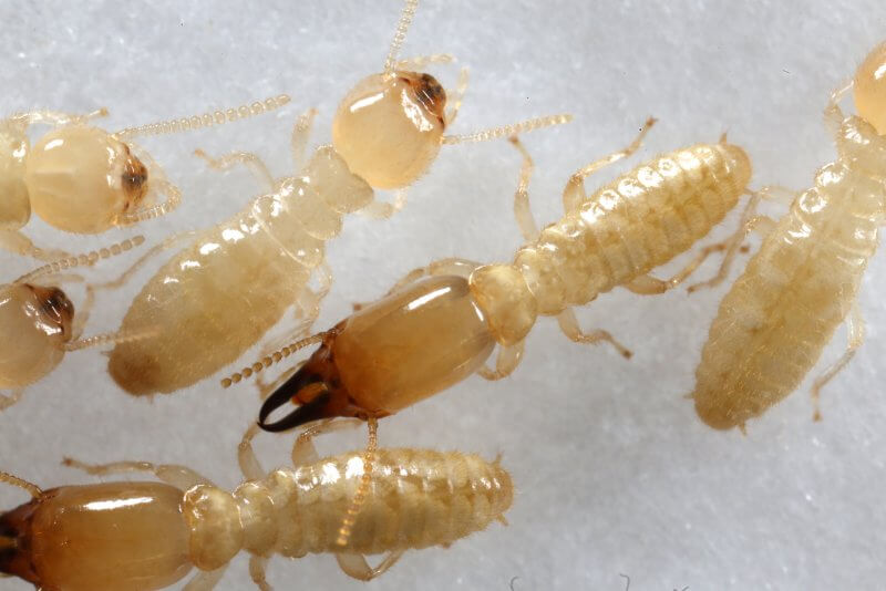 شركة مكافحة النمل الابيض شمال الرياض