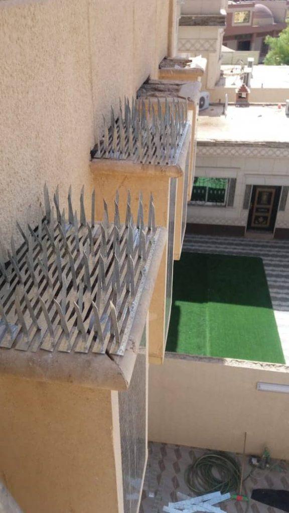 شركة مكافحة الحمام وسط الرياض